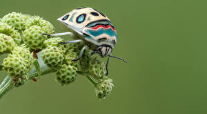 Wallpapers Bugs Insects Closeup