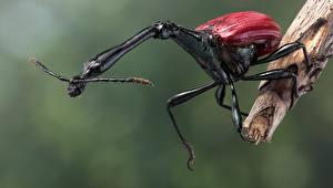 Fondos de escritorio Coleoptera Insectos De cerca giraffe weevil Animalia