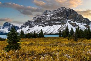 Wallpaper Canada Mountains Spruce Rocky Mountains, Alberta Nature