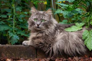 Fondos de escritorio Gatos Contacto visual Rama animales