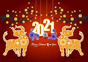 Pictures Christmas Bull 2021 Red background Text English