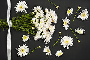 Bilder Chrysanthemen Grauer Hintergrund Weiß Band Blumen