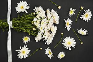 Image Mums Gray background White Ribbon Flowers