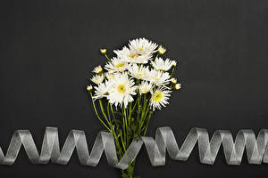 Images Mums Gray background White Ribbon flower