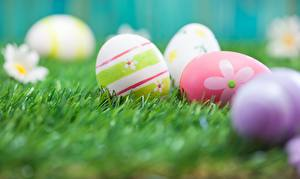 Wallpaper Easter Eggs Grass