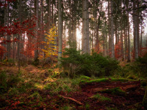 Picture Forests Autumn Trees Moss Nature
