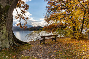 Wallpaper Germany Autumn Coast Trees Leaf Bench Seehausen Nature