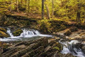 Wallpapers Germany Forest Autumn Waterfalls Moss Alexisbad
