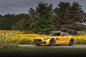 Images Mercedes-Benz Yellow 2020 AMG GT R Cars