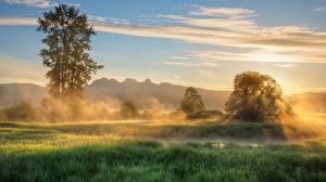 Image Morning Trees Fog Grass