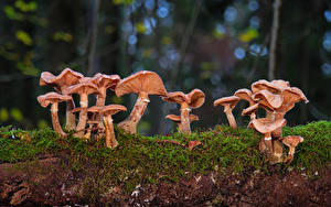 Wallpapers Mushrooms nature Moss disc fungus