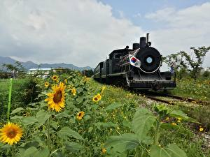 Wallpaper South Korea Trains Sunflowers Flag