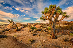 Wallpaper USA Parks Stones Sky California Trees Joshua Tree National Park Nature