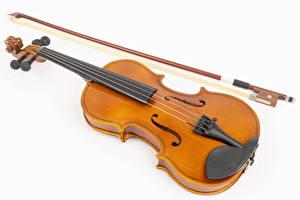 デスクトップの壁紙、、バイオリン、白背景、音楽