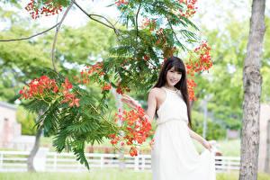 Sfondi desktop Asiatici Di ramo Bruna ragazza Vestito Sorriso Ragazze