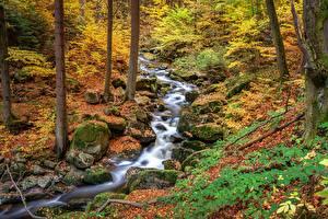 Wallpaper Autumn Stones Streams Leaf Moss Nature