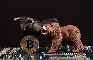 Bakgrundsbilder på skrivbordet Ett mynt Bitcoin Björn Tjurar Svart bakgrund