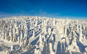 Photo Finland Winter Parks Snow Trees Riisitunturi National park Nature