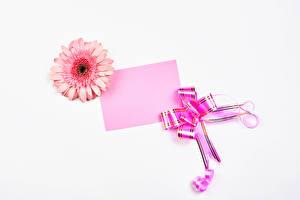 Fondos de Pantalla Gerbera El fondo blanco Tarjeta de felicitación de la plant Hoja de papel Lazo Rosa color Flores imágenes