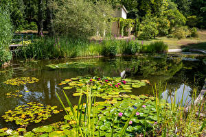 Images Germany Potsdam Parks Pond Nymphaea Bush Park Sanssouci