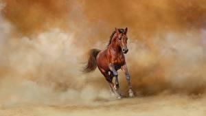 Desktop hintergrundbilder Pferd Lauf  Tiere