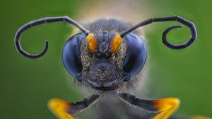 Desktop wallpapers Macro photography Closeup Hornet Animals
