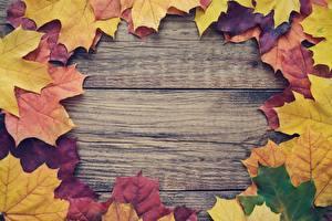 Desktop wallpapers Acer Leaf Template greeting card Wood planks