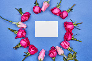 Pictures Roses Colored background Template greeting card Sheet of paper Flowers