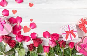 Sfondi desktop Rosa Modello biglietto di auguri Petali Tavole fiore