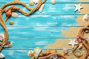 Sfondi desktop Stelle marine Conchiglie marine Modello biglietto di auguri Tavole Sabbia Corde