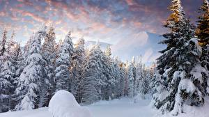 Wallpapers Sunrises and sunsets Winter Forest Landscape photography Snow