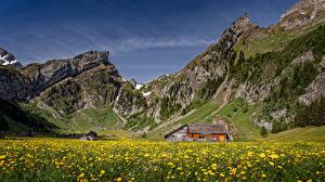 Fotos Schweiz Gebirge Haus Grünland Löwenzahn Alpen Alpstein Natur