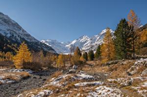 Bilder Schweiz Gebirge Alpen Bäume Morteratsch