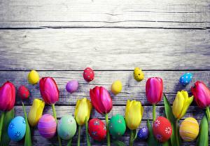 bilder Tulipaner Påske Gratulasjonskort Mal Egg Treplanker Blomster bilder skrivebordsbakgrunn
