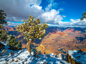 Desktop wallpapers USA Parks Grand Canyon Park Cliff Clouds Trees Snow Arizona Nature