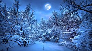 Desktop wallpapers Winter Forests Evening Snow Moon Branches Nature