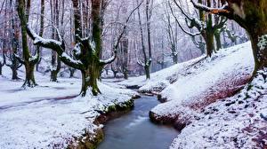Sfondi Inverno Foreste Neve Alberi Ruscello Natura immagini