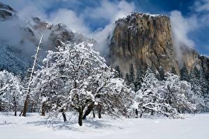 Fondos de Pantalla Invierno Parque EE.UU. Yosemite Nieve árboles Roca California El Capitan Naturaleza imágenes