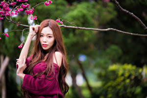 Picture Asiatic Branches Hands Glance Girls