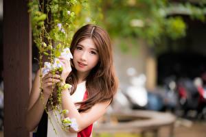 Bilder Asiaten Braunhaarige Starren Hand Strauch Mädchens
