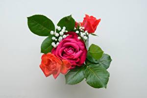 Sfondi desktop Bouquet Rosa Sfondo grigio Fiori
