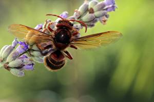 Desktop wallpapers Closeup Macro Wasp Insects Bokeh Animals