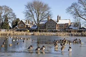 Bilder England Winter Haus Teich Entenvögel Chiltern hills Städte