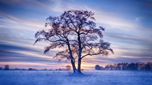 Bilder Deutschland Winter Abend Bäume Schnee Natur