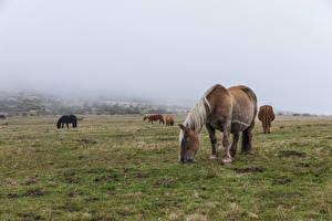 Bilder Grünland Pferd ein Tier