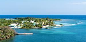 Bilder Insel Meer Tropen Honduras, Roatan island, Mahogany Bay Natur