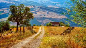 Hintergrundbilder Italien Wege Bäume Campania