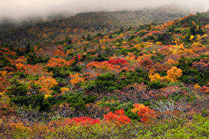 Wallpaper Japan Autumn Shrubs Trees Fog Zao Onsen Ski Resort Nature