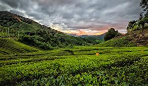 Hintergrundbilder Malaysia Felder Morgendämmerung und Sonnenuntergang Hügel Cameron Highlands Natur