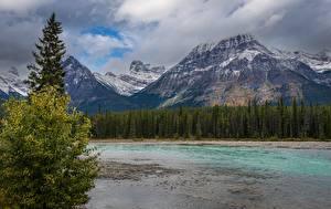 Pictures Mountains River Park Forest Canada Jasper Park Alberta Nature